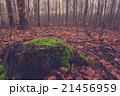森林 林 森の写真 21456959