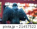 高尾山の天狗(東京都の風景) 21457522