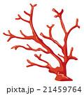 赤珊瑚のイラスト 21459764