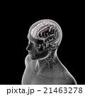 脳のモデル, 医療用人体頭部の模型 21463278