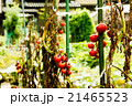 プチトマト 21465523