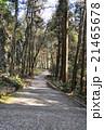 遊歩道 参道 21465678