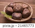 椎茸 生椎茸 冬茹の写真 21465773