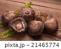 椎茸 生椎茸 冬茹の写真 21465774