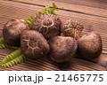 椎茸 生椎茸 冬茹の写真 21465775