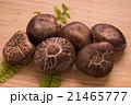椎茸 生椎茸 冬茹の写真 21465777