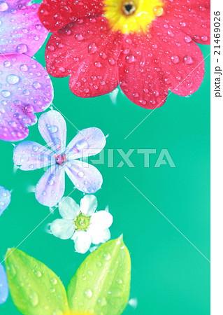 水に浮く花びら 21469026