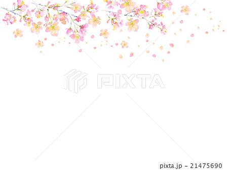 イラスト 桜 背景 春 21475690