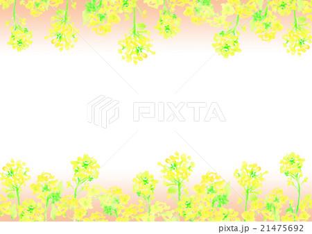 イラスト 菜の花 背景 21475692