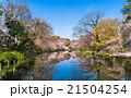 東京 桜が咲く井の頭公園 21504254