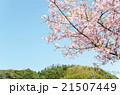桜と山と青空と  21507449