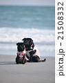 黒ぱぐ親子、縦構図 21508332
