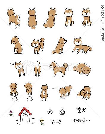 柴犬 イラスト 21508734
