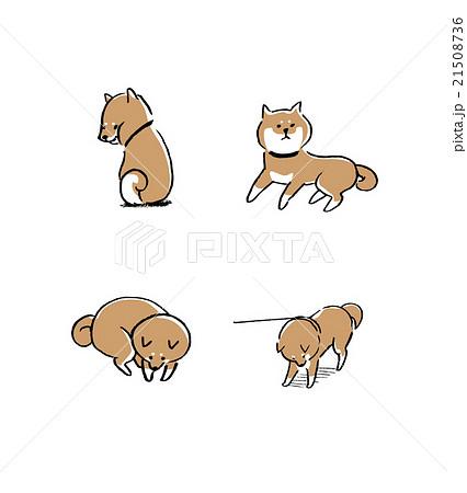 柴犬 イラストのイラスト素材 21508736 Pixta