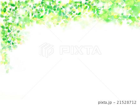 イラスト 新緑 木漏れ日 背景 21528712