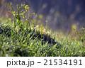 風景 21534191