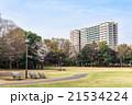 公園 桜 春の写真 21534224