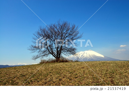 滝沢市の一本桜 21537419