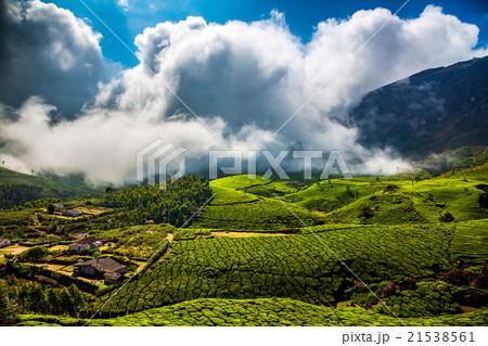Tea plantations in India 21538561