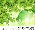 新緑(若葉) 21547393