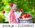 リンゴ 林檎 くだものの写真 21548645