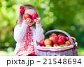 リンゴ 林檎 くだものの写真 21548694