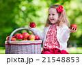 リンゴ 林檎 くだものの写真 21548853