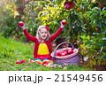 りんご リンゴ 林檎の写真 21549456