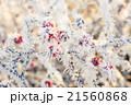 霜 樹木 樹の写真 21560868
