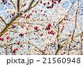 Hoarfrost on leaves 21560948