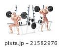 Barbell Squat Exercise. Anatomical 3D illustration 21582976