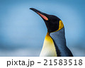 Close-up of king penguin with sea behind 21583518