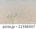 ガラス瓶/漂着物 21586407