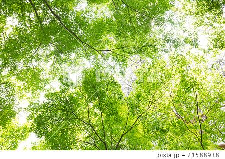 森の木々 21588938