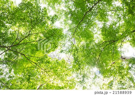 新緑の森 21588939