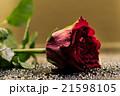 薔薇 花 開花の写真 21598105
