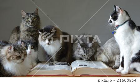 猫たちと本3 21600854