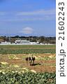 晴れの畑 21602243