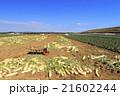 晴れの畑 21602244