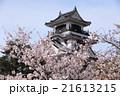 高知城桜の春 21613215