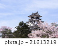 高知城桜の春 21613219