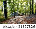 あき 秋 森林の写真 21627326