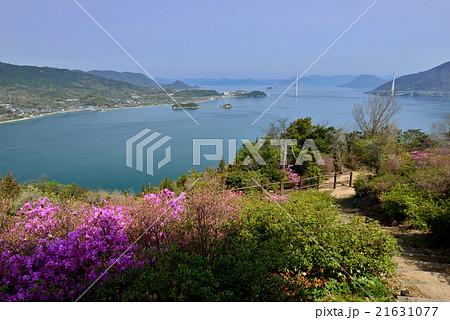 開山公園の桜 21631077