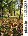 あき 秋 ベラルーシの写真 21633228