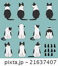 動物 猫 はちわれのイラスト 21637407