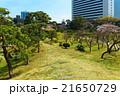旧芝離宮恩賜庭園 庭園 日本庭園の写真 21650729