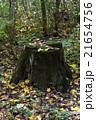 きりかぶ 切り株 森林の写真 21654756