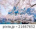 東京ミッドタウンの桜並木 21667652