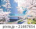 東京ミッドタウンの桜並木 21667654