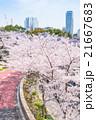 東京ミッドタウンの桜並木 21667683